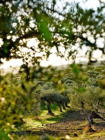 オリーブオイルの保管方法