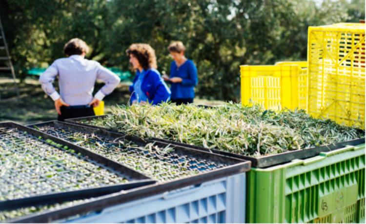 生産者のクリスティーヌ・シェランが広大なオリーブ畑で他の生産者たちと語り合う。