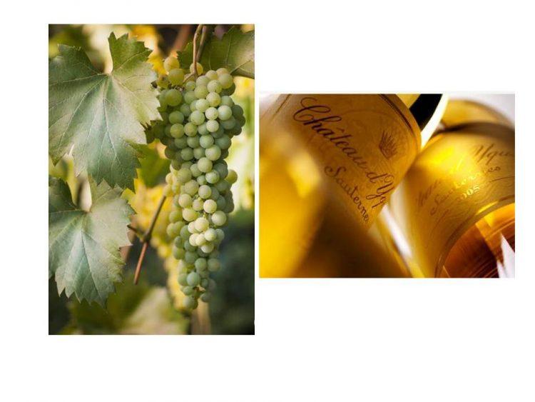 ソーテルヌワイン