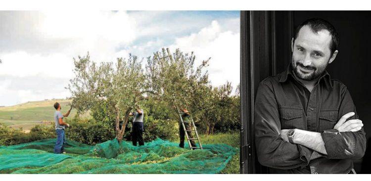 イタリア・シチリア産エキストラバージンオリーブオイル「ジェラーチ」は、ベリス渓谷の広大なオリーブ畑で栽培されています。